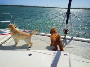 2 dogs urinate on a sail boat trampoline/house train your dog for a boat
