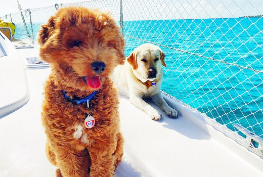 2 dogs on boat deck